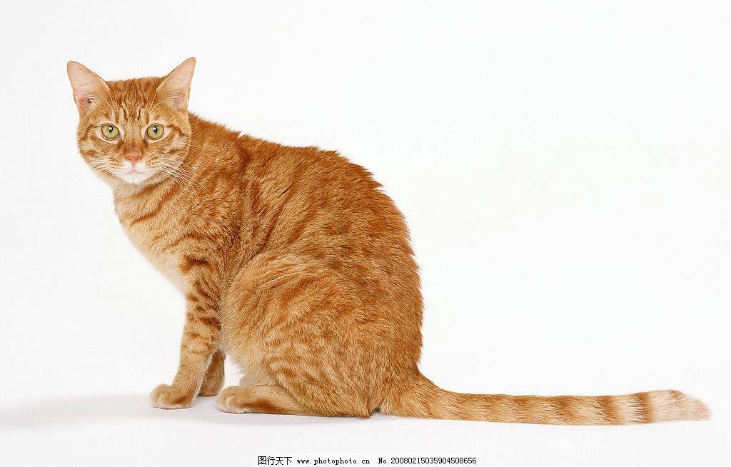 猫和其他动物图片