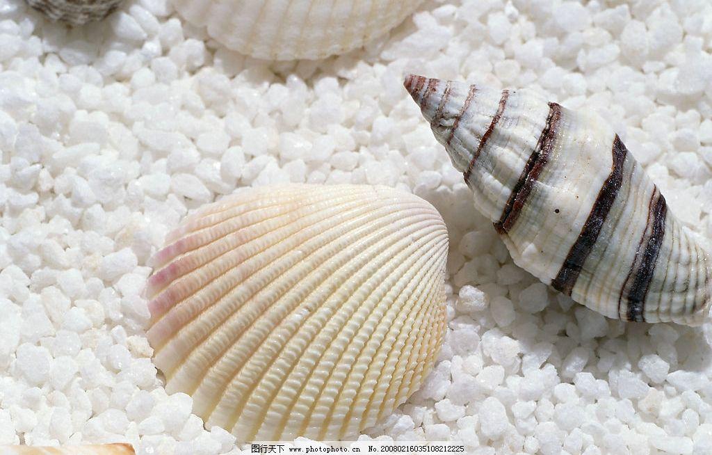 贝壳类工艺品 贝壳类工艺品海星海贝海螺大海海洋资源拾取摆设阵设