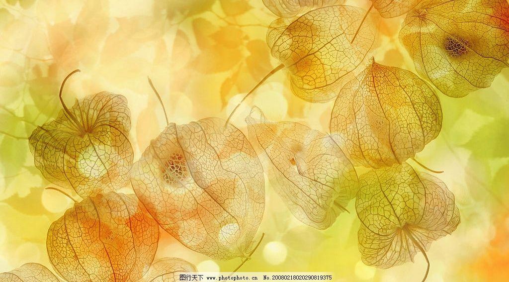 底纹 底纹边框 背景底纹 梦幻四季-秋天冬天 设计图库 350 jpg