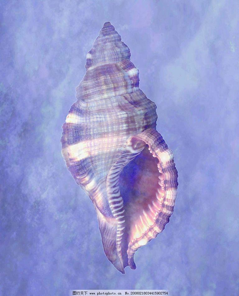 海螺图片_山水风景_自然景观_图行天下图库