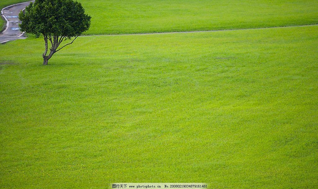 树,草地 自然景观 自然风景 大自然环保 摄影图库 350 jpg