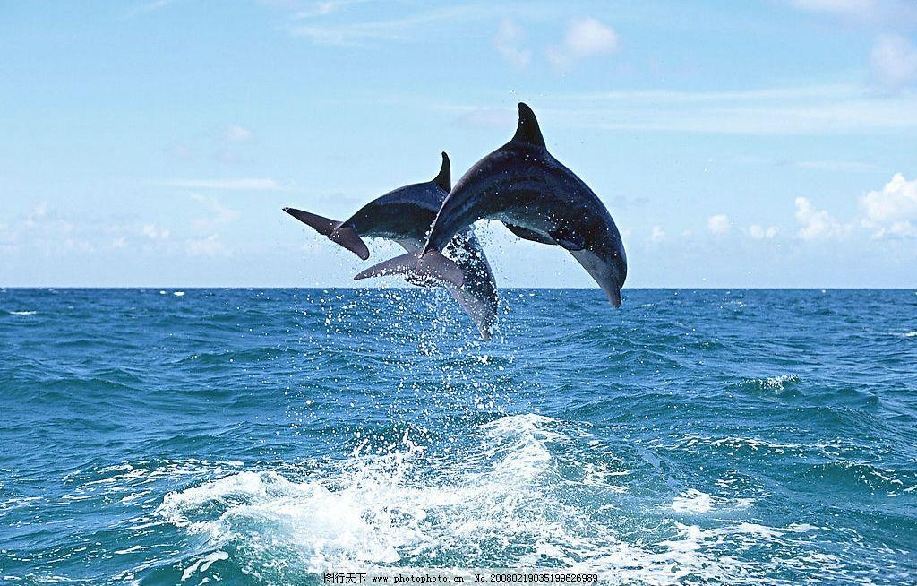 壁纸 动物 鲸鱼 1024_654