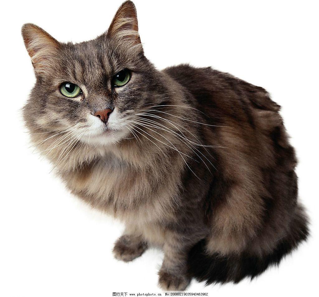超可爱的猫图片