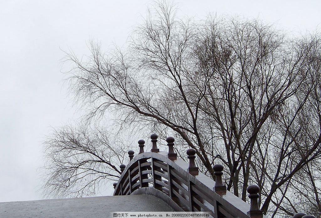 风景 桥 树 意境 自然景观 自然风景 摄影图库 480 jpg