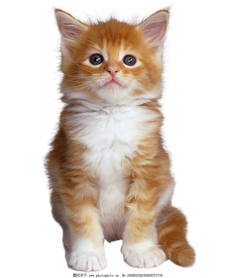 小猫崽图片