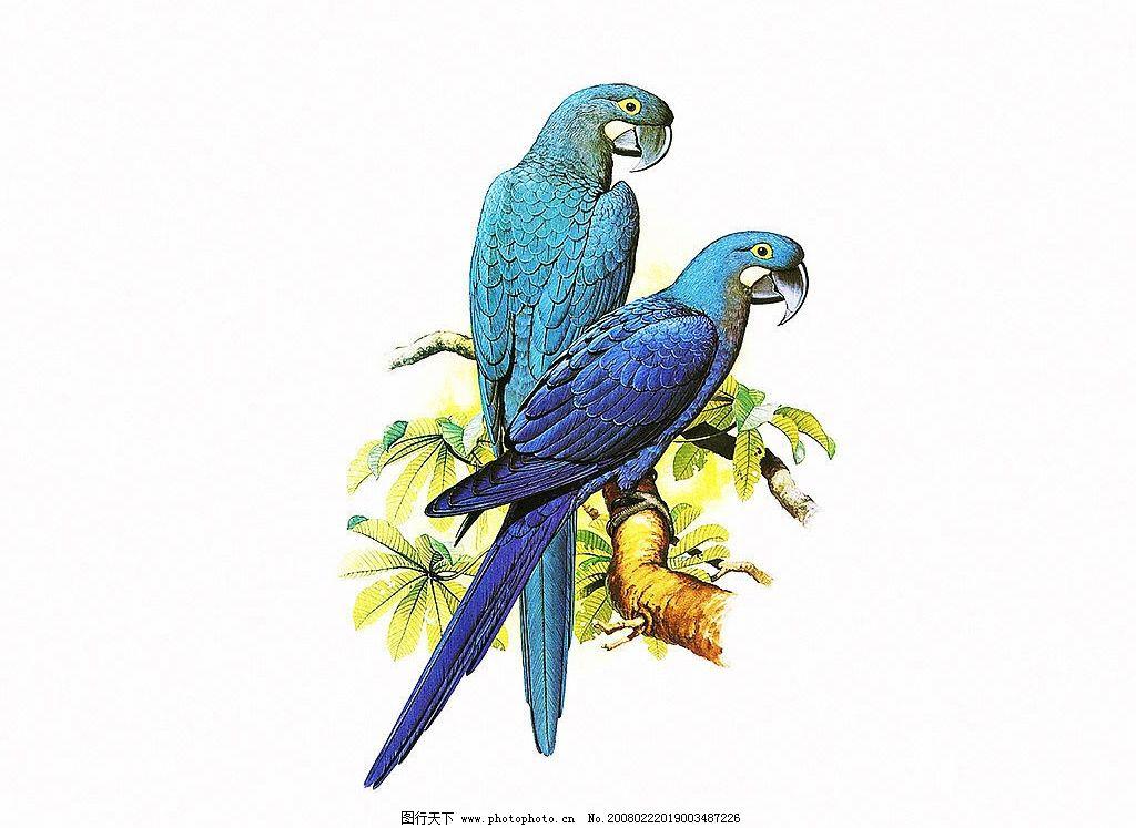 鹦鹉 鹦鹉的画 工笔画 花鸟 特写 文化艺术 绘画书法 设计图库