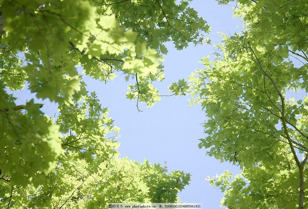 自然 自然景观 自然风景 树 摄影图库