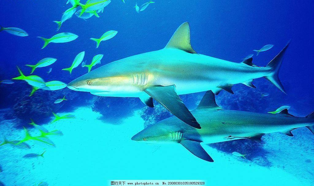 海底世界 生物世界 海洋生物 摄影图库 72 jpg