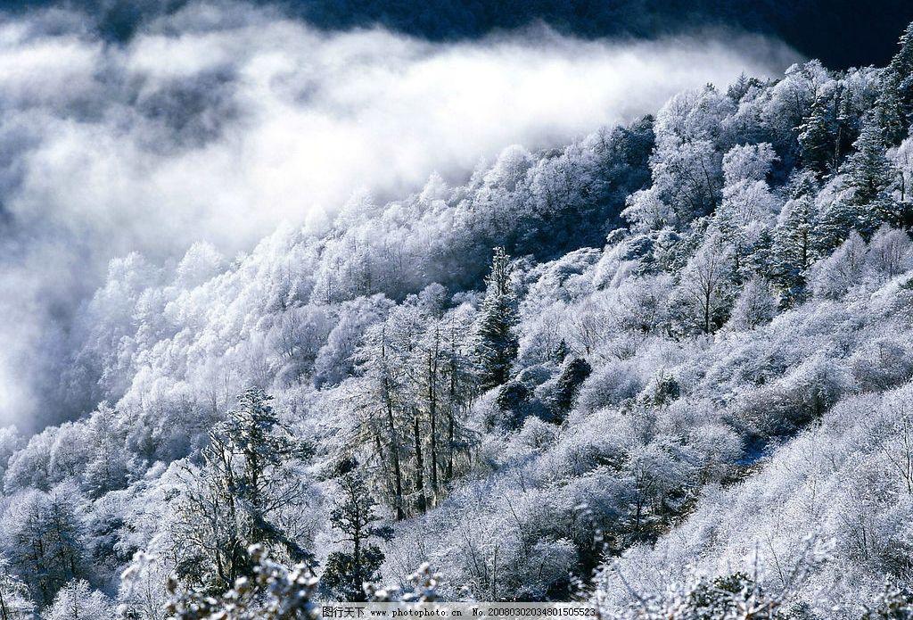浪漫雪景 浪漫 雪景 冬天 自然景观 自然风景 摄影图库 72 jpg