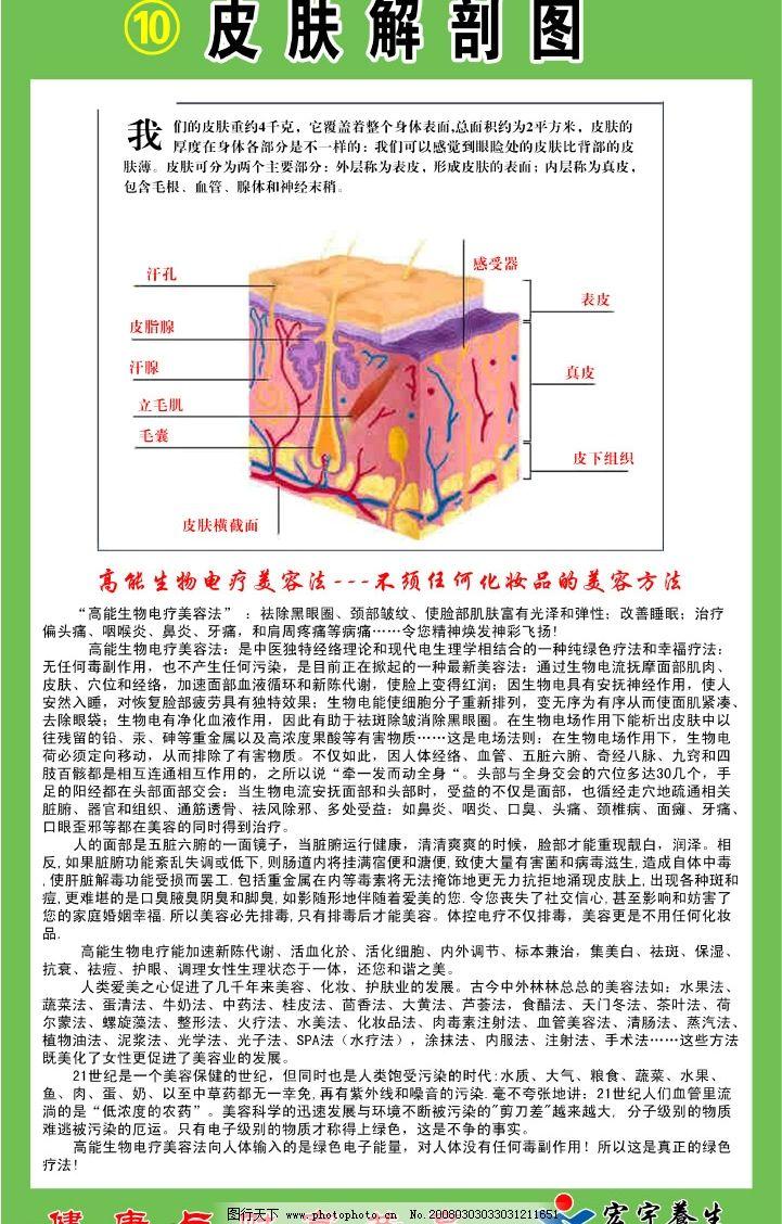 皮肤解剖图 循环系统 神经系统二 人体 人体结构 内分泌 内脏