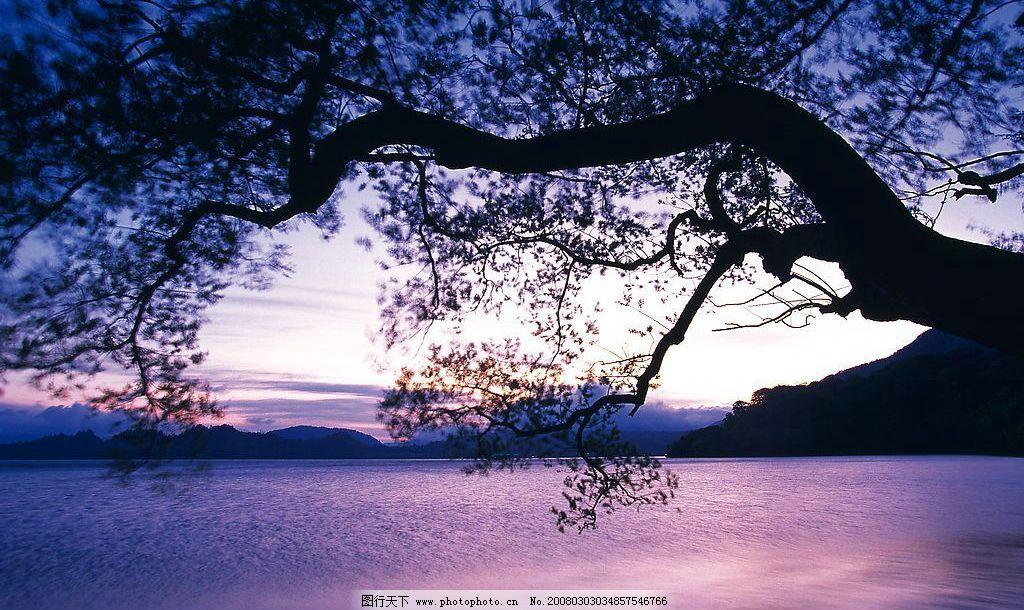 水边树木图片