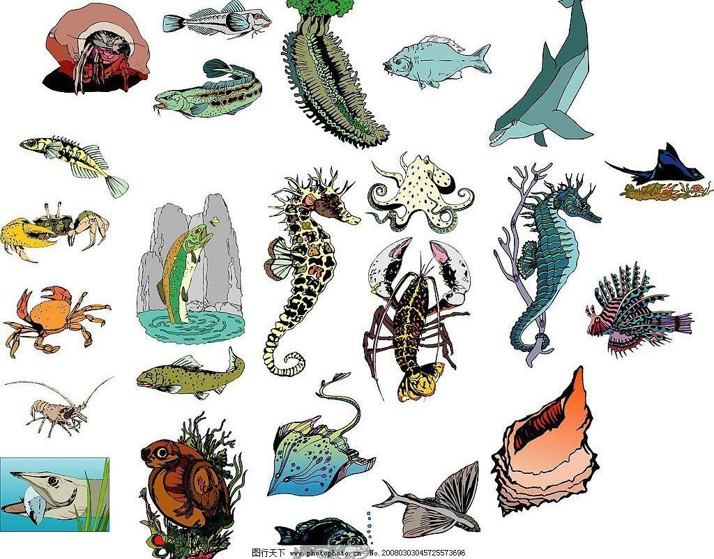 海洋生物78 海洋生物 水母 章鱼 水族鱼 海生物 贝壳 海豚 海濑 海象