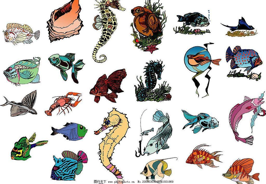海洋生物54图片