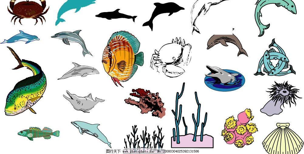 海洋生物516图片