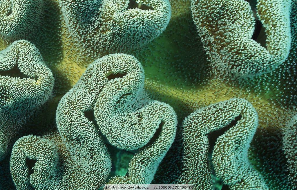 海底世界 海苔 生物世界 海洋生物 摄影图库 350 jpg