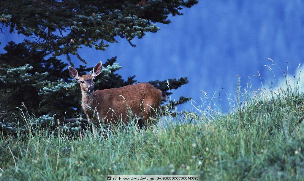动物世界 鹿 精灵 森林 生物世界 野生动物 摄影图库