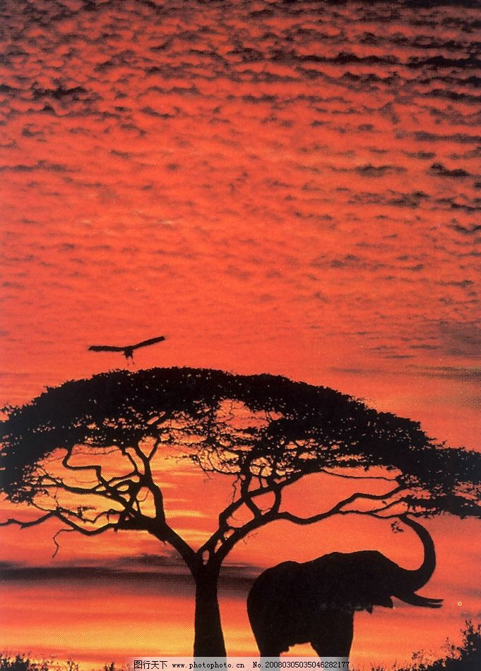 动物海报天空背景