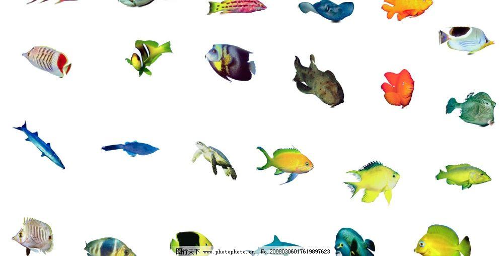 海鱼简笔画大全