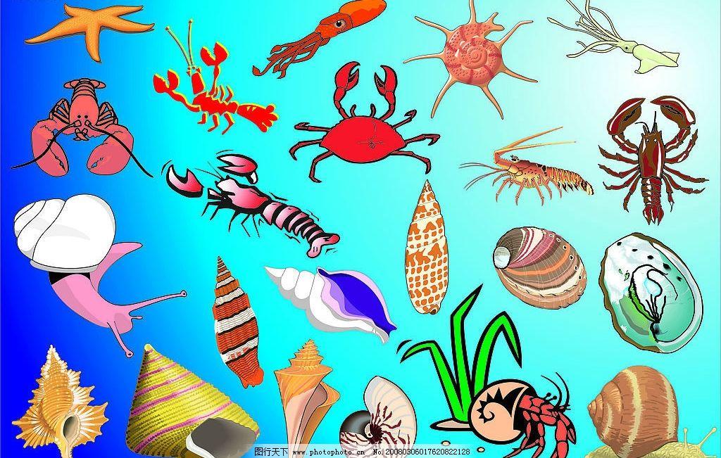 海洋动物图片