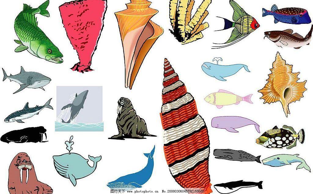 海洋生物820图片