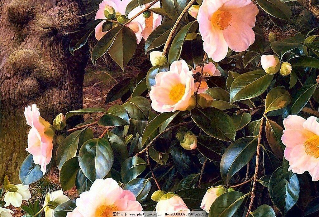 手绘花卉-春天山茶花图片