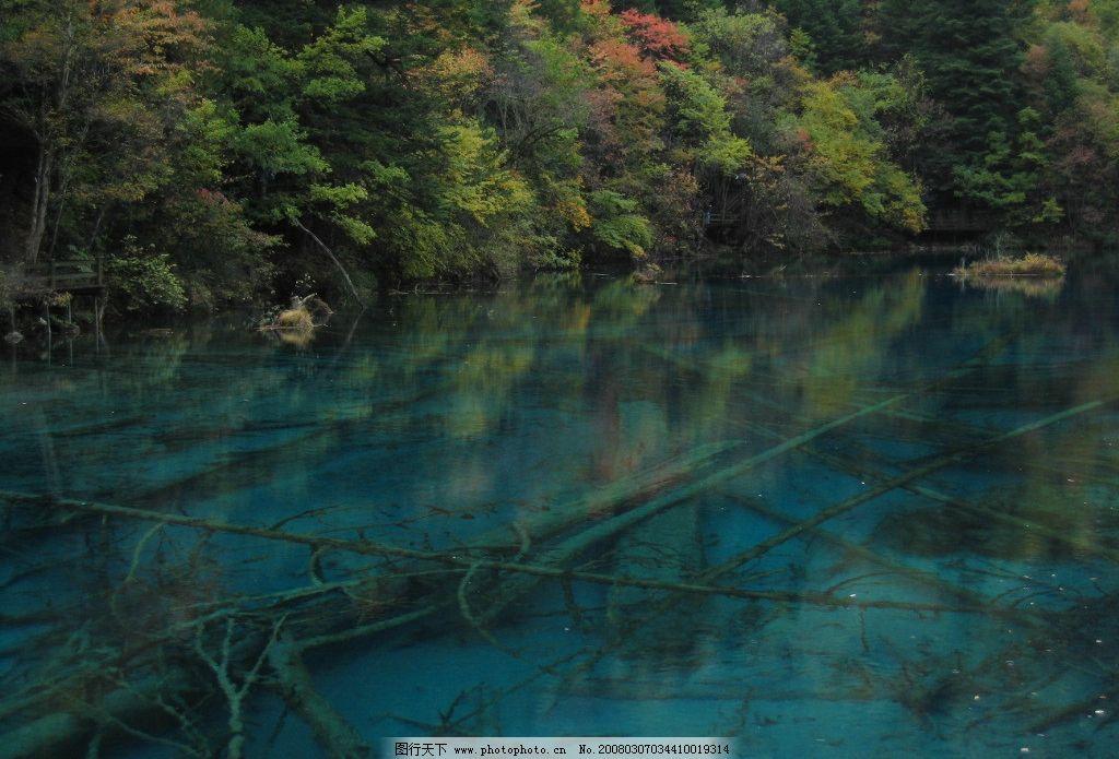 九寨风光 九寨沟 水潭 灌木 水中枯木 自然景观 山水风景 摄影图库