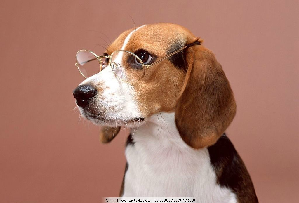 戴眼镜的狗图片