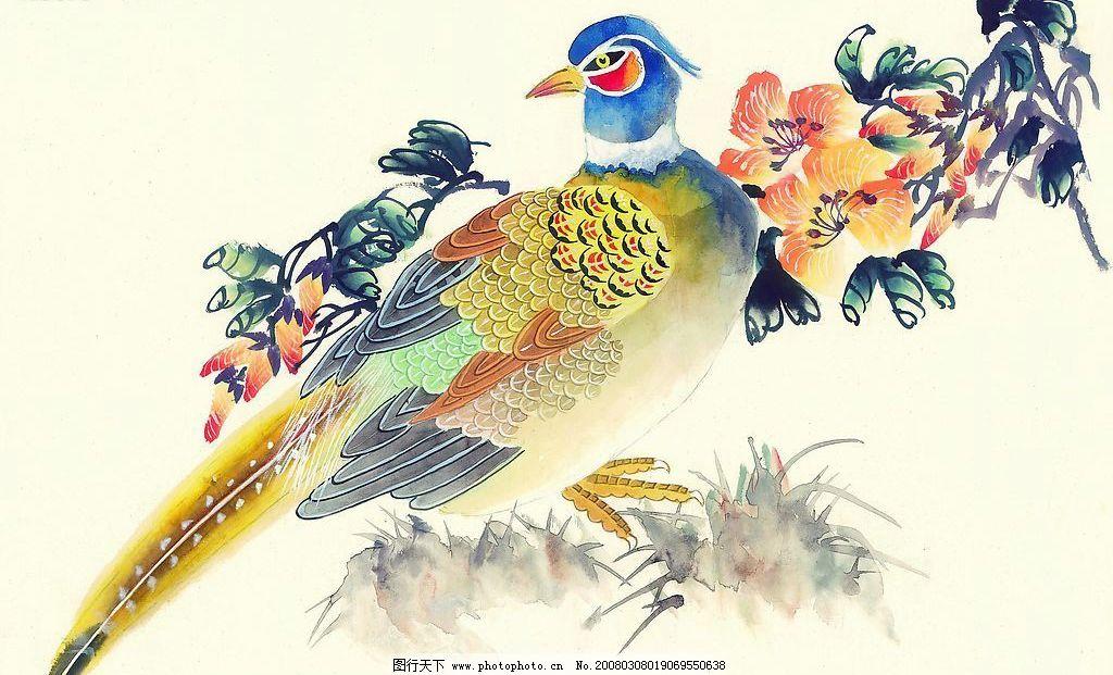 锦鸡 动物 水画 草 文化艺术 绘画书法 中国吉祥鸟类 设计图库 72 jpg