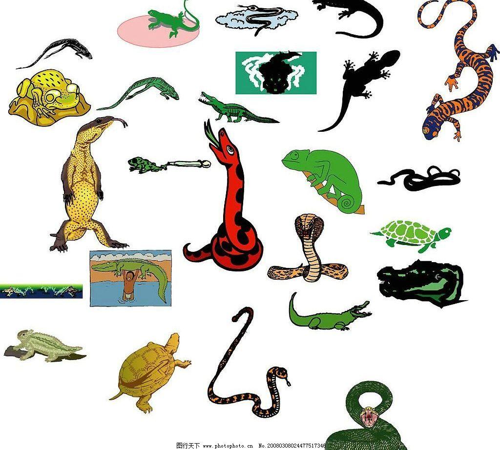两栖动物2 蜥蜴 蛇 乌龟 壁虎 水里动物 爬行 爬行动物 矢量图库