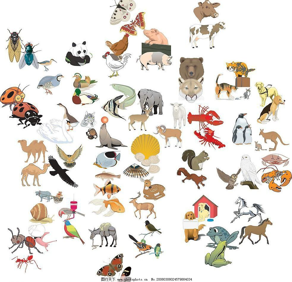 鸟 家禽 动物图片,矢量图库-图行天下图库