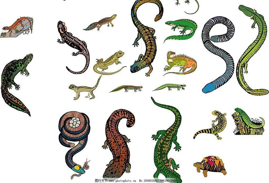 许多 蛇 动物 爬行类 两栖类 生物世界 野生动物 矢量图库 eps   海洋
