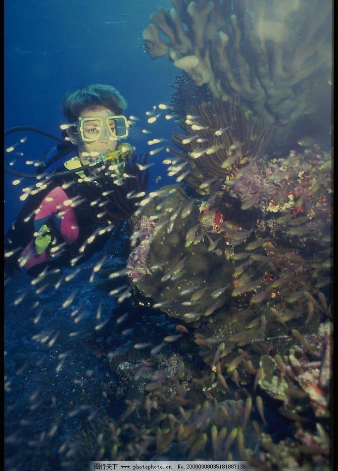 海底动物与潜水员 海底动物 鱼类 贝类 珊瑚 珍稀海底动物 生物世界
