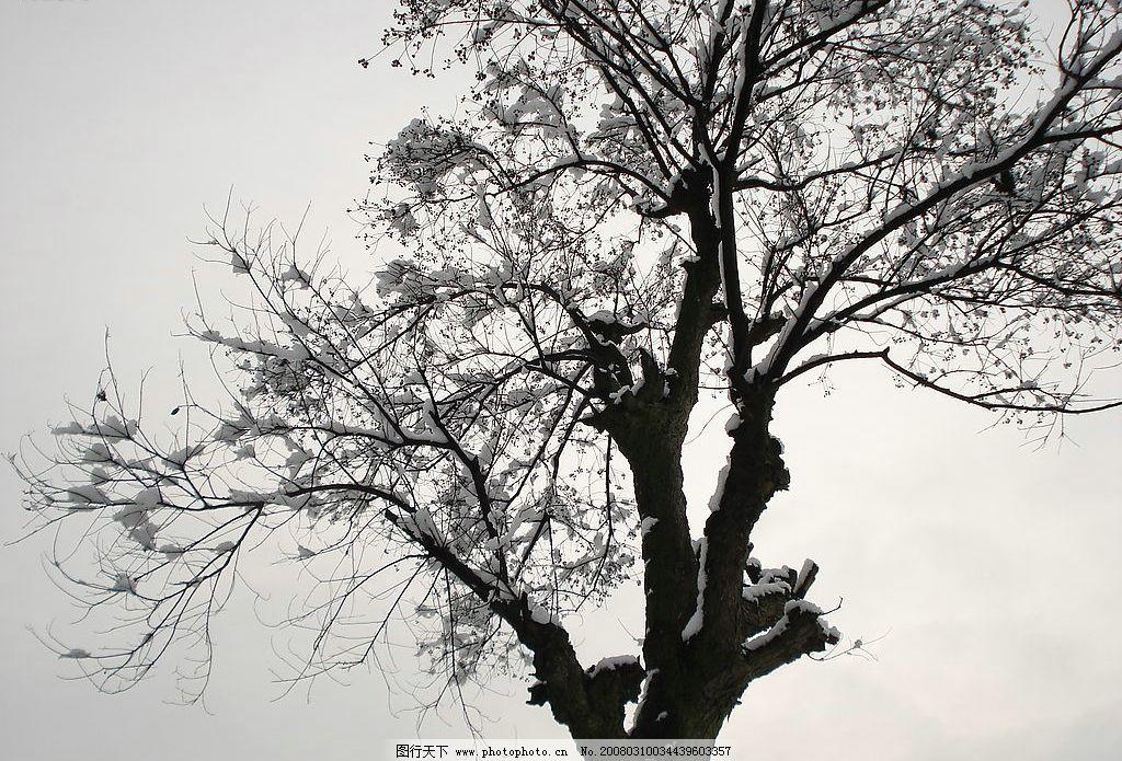 雪景 雪 树 自然景观 山水风景 摄影图库 72 jpg