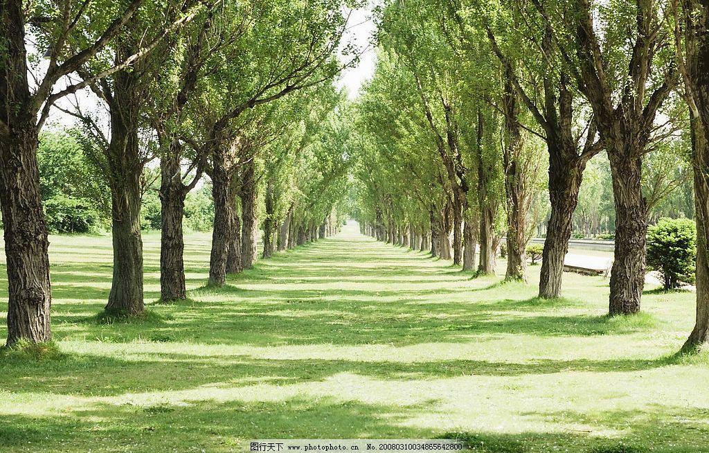 郊外树萌图片,绿草地 树林 自然景观 自然风景 美景