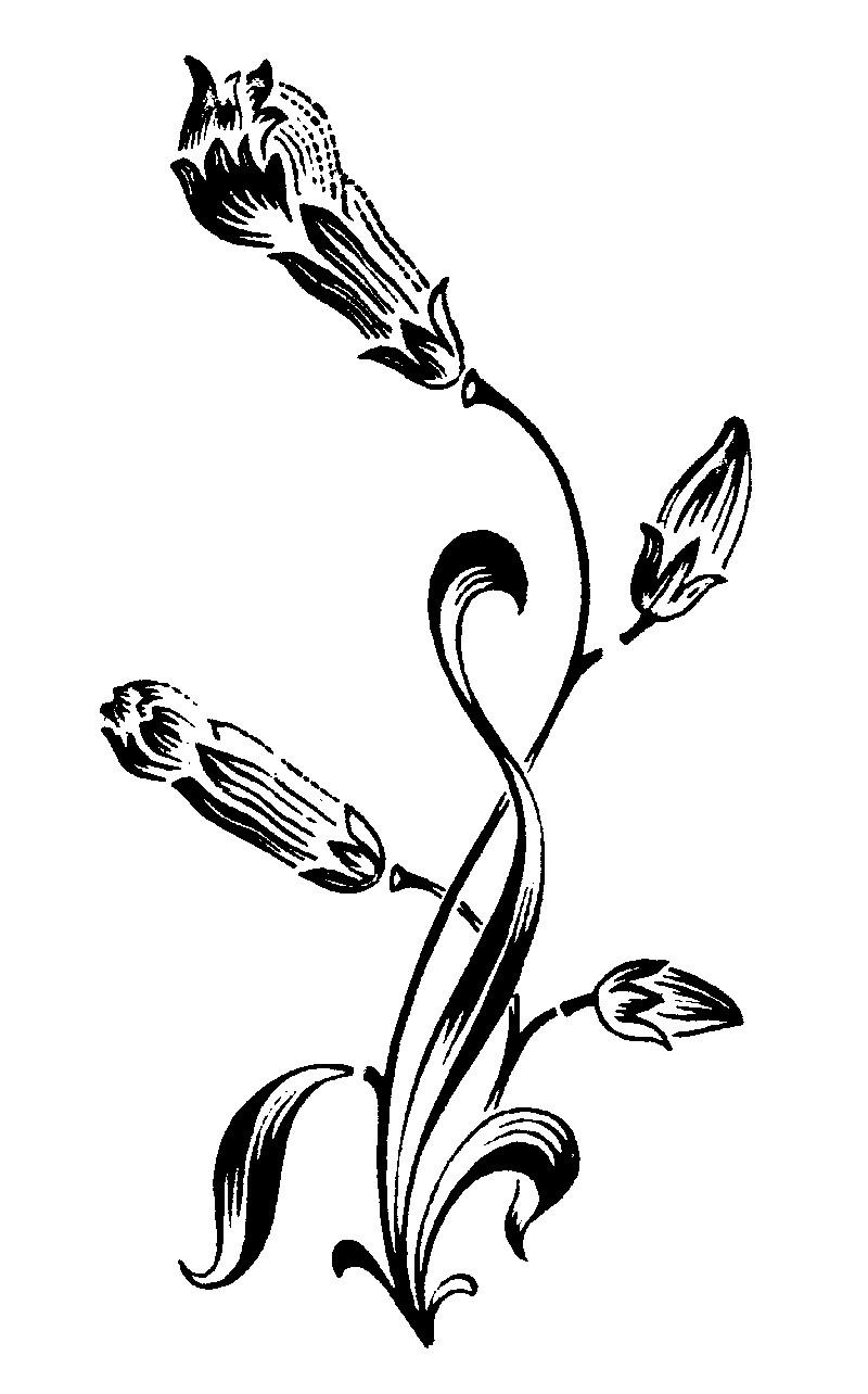 古典花纹0558