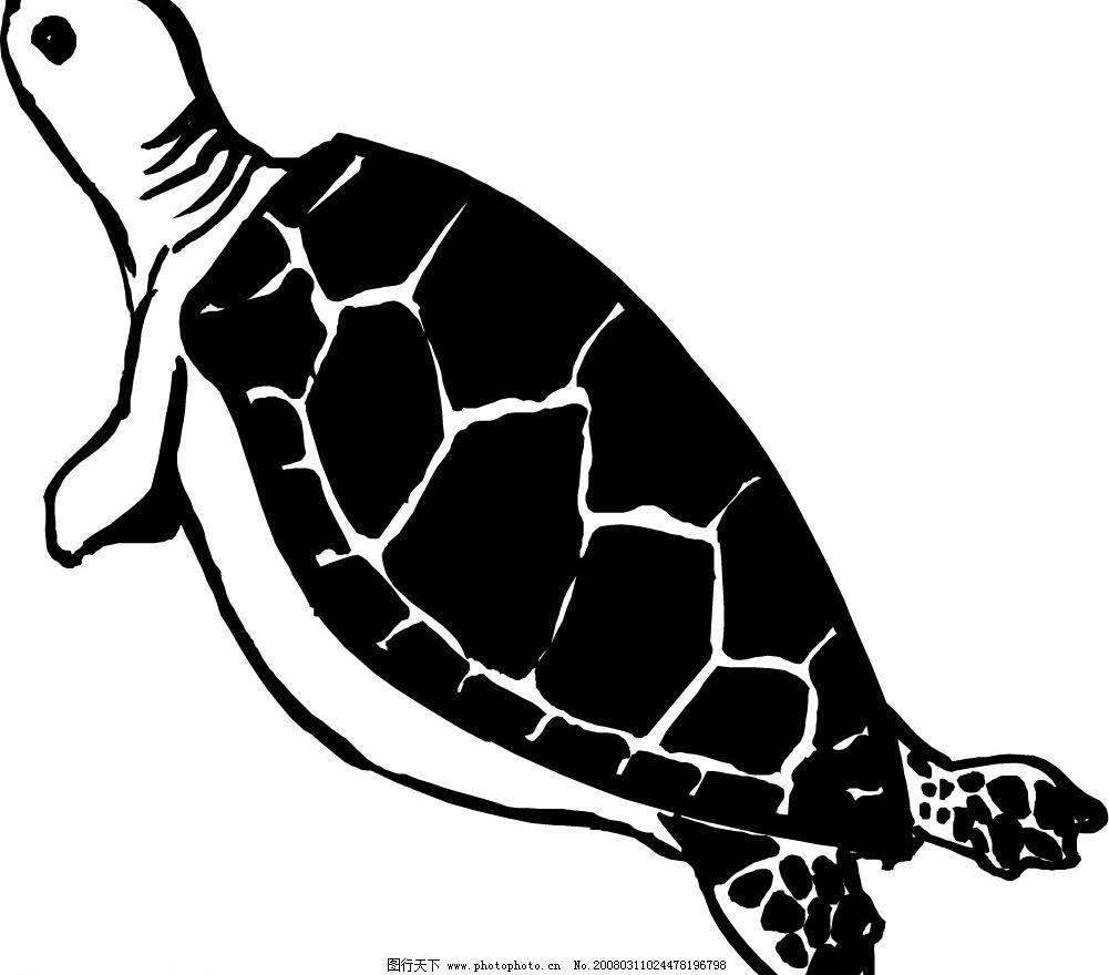 海龟30 海龟 水底生物 动物 爬行动物 两栖动物 生物世界 野生动物