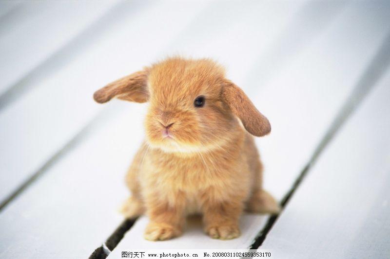 可爱小动物0162