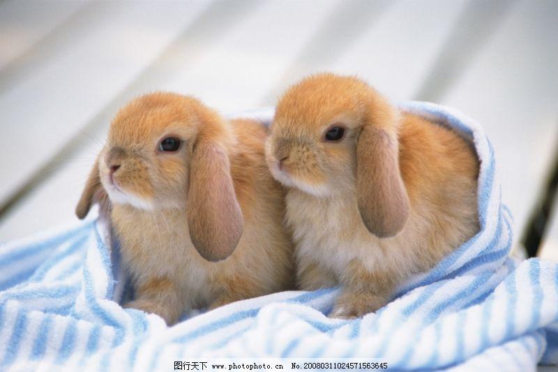 可爱小动物0158