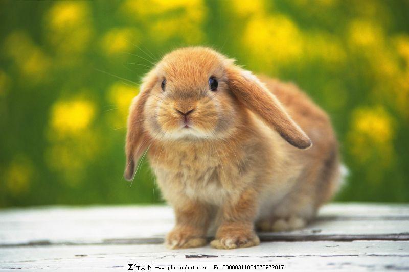 可爱小动物0150