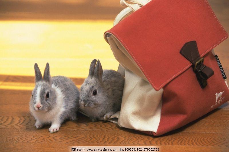 动物 可爱小动物