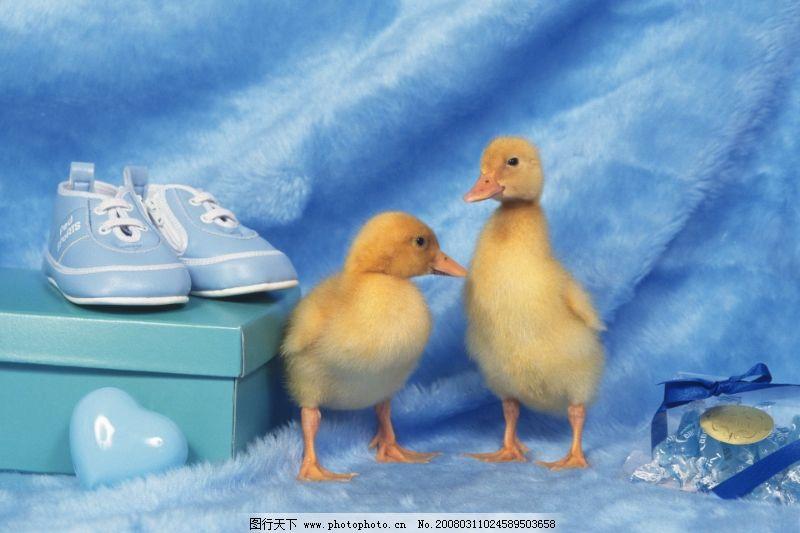 可爱小动物0126