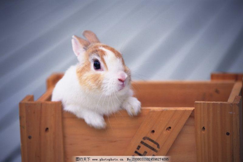 可爱小动物0107_家禽家畜_生物世界_图行天下图库