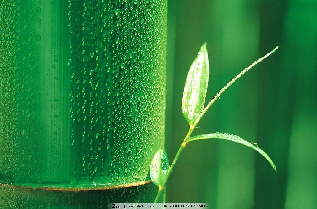 竹子 绿色 自然景观 自然风景 摄影图库