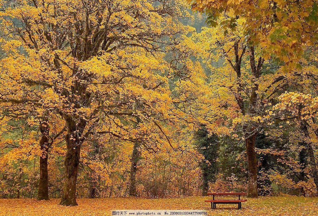 秋意 枫叶 自然景观 山水风景 摄影图库