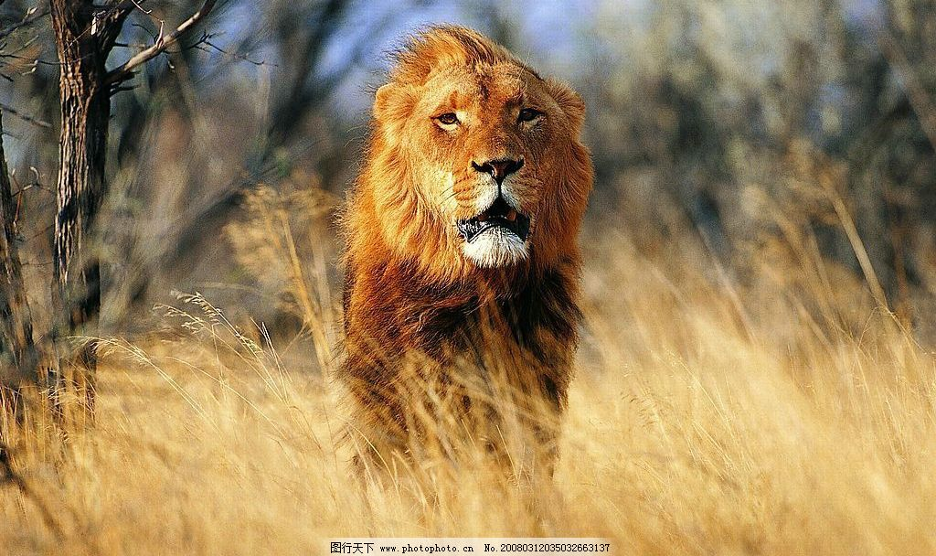 生物世界 野生动物