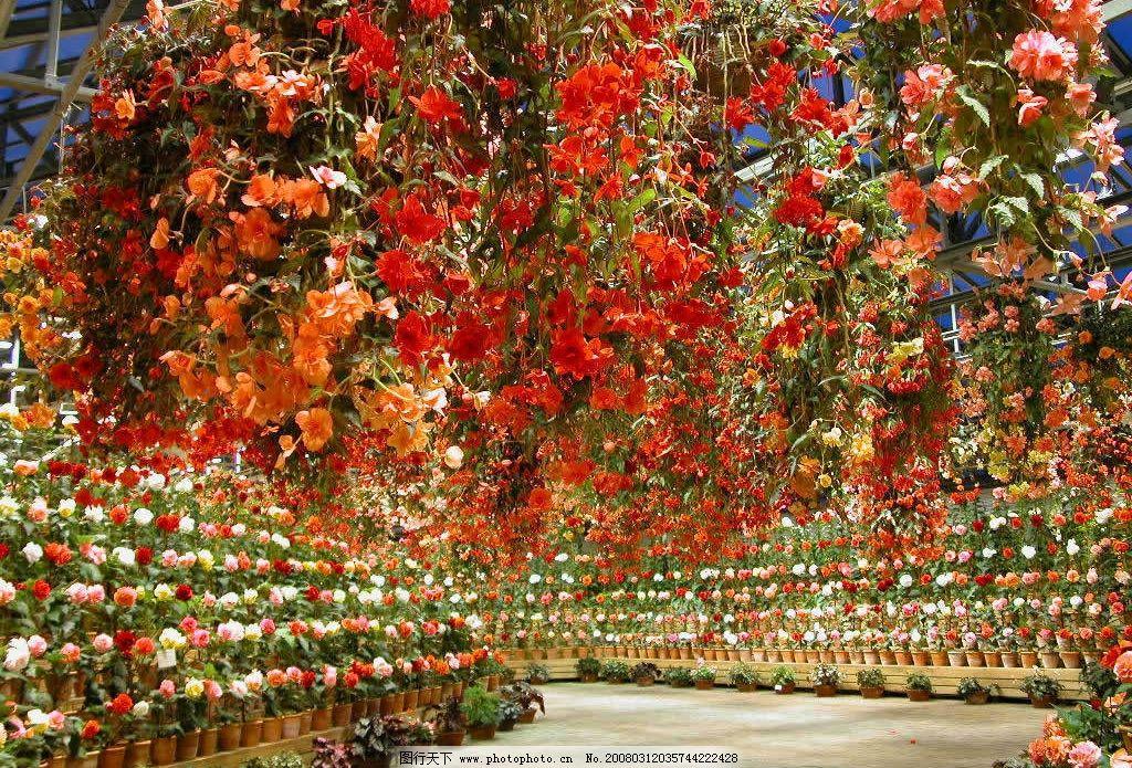 花卉 花卉市场 自然景观 自然风景 花朵风景 摄影图库 72 jpg