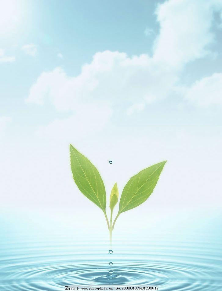 环保树叶风景贴画