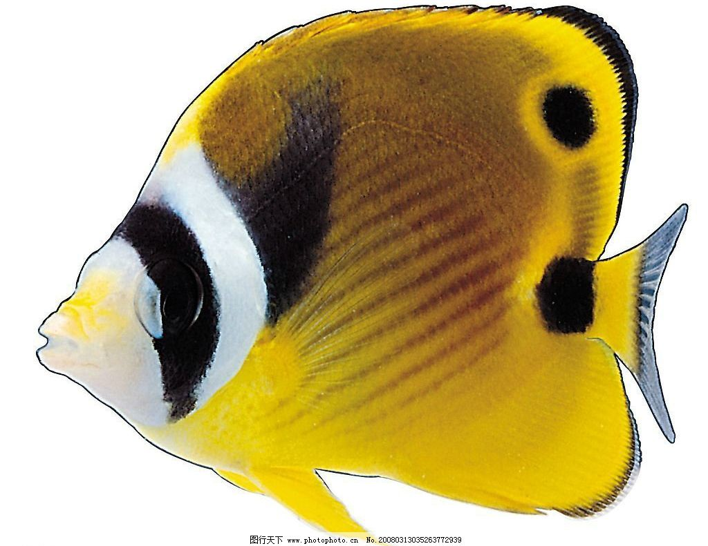 壁纸 动物 鱼 鱼类 1024_791