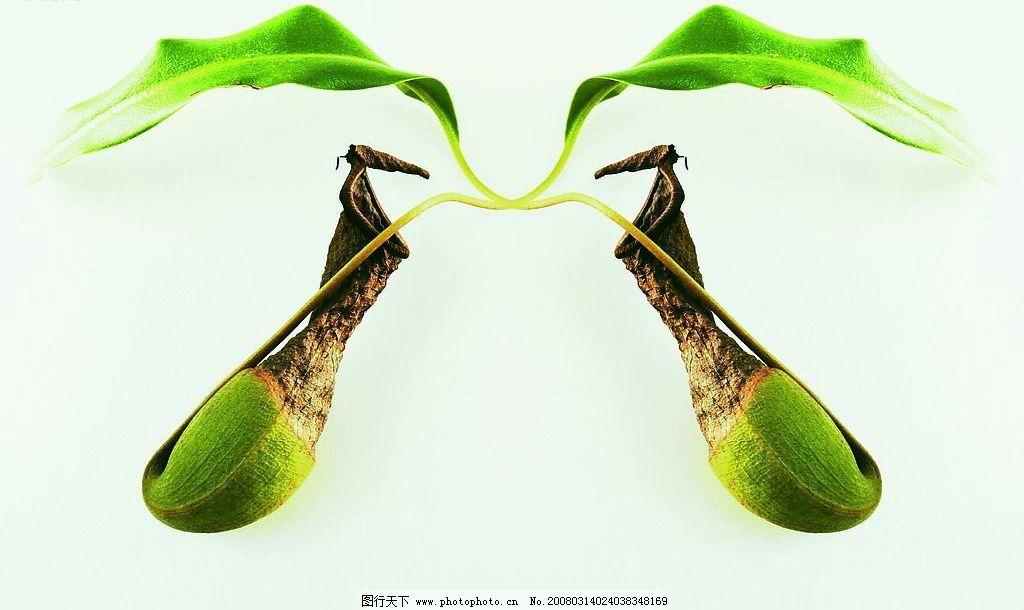 对称美 对称 自然景观 自然风景 jpg 设计图库 350 自然风光