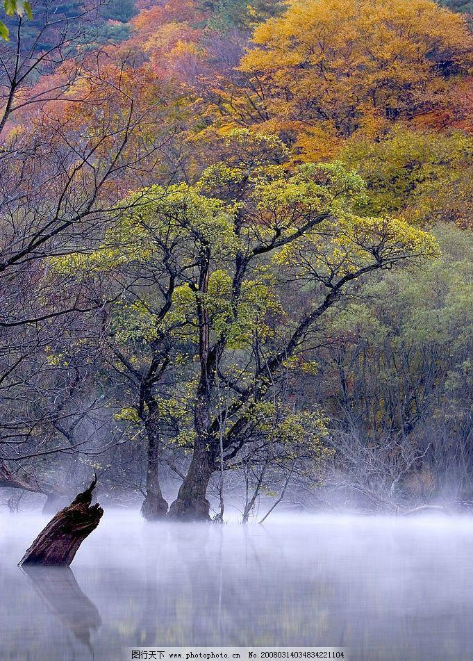 七彩山谷 山谷,七彩森林,雾弥漫大地 自然景观 自然风景 摄影图库 300